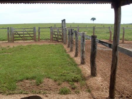 Farmland for sale in Mato Grosso Brasil - Reference: FARM MT-015