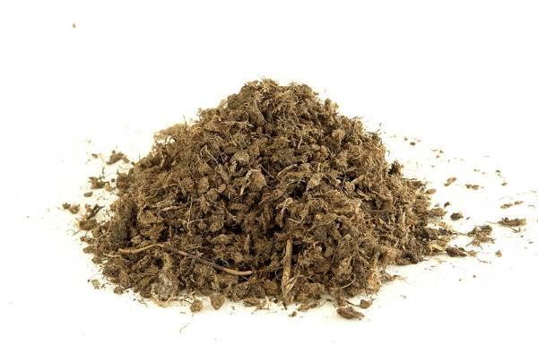 White peat moss -