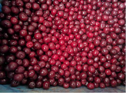 IQF SOUR CHERRY - IQF SOUR CHERRY PITTED