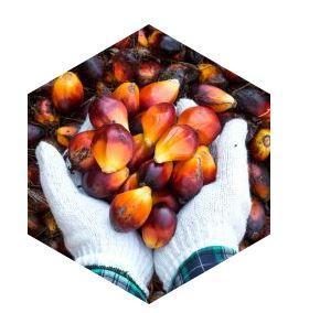 L'huile de palme - Matières premières