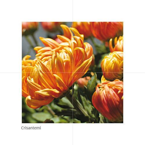 Crisantemi - null