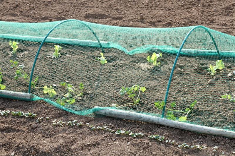 Filet De Protection Anti-oiseaux 25 M² (5x5 M) - Matériel de récolte et stockage fruits et légumes