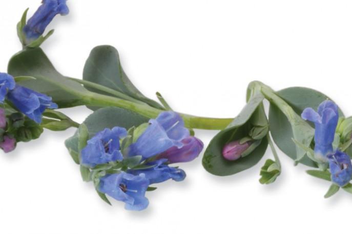 Blue Ocean - Micro végétaux