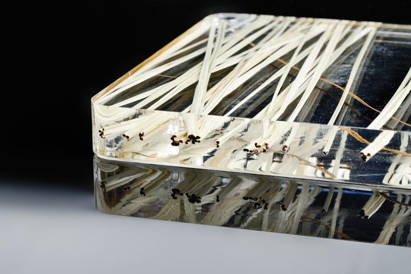 Lastre con inglobati in plexiglass