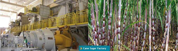 Cane Sugar Factory - null