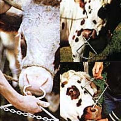 Pince Nez - Matériel d'élevage