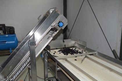 Production of prunes