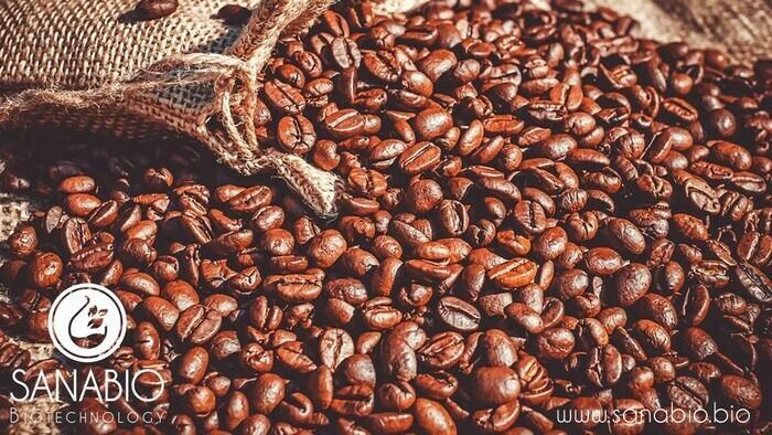 Kaffeebohnenpeeling, BIO KOSMETIK - null