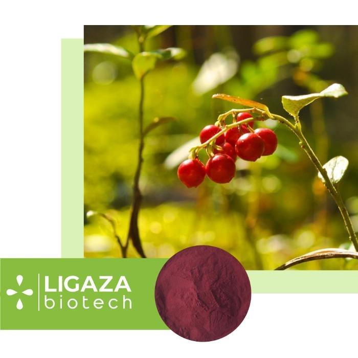 cranberry (Oxycóccus) -