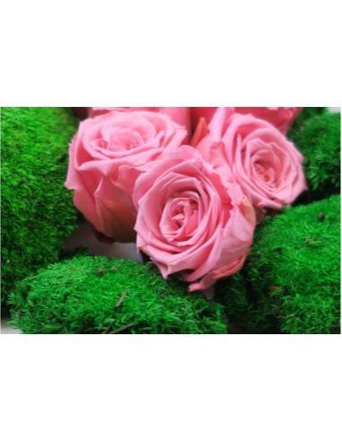 Achat végétaux végétal stabilisé naturel rose éternelle - Achat en ligne de végétaux naturels sans entretien