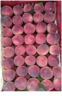 PEACH - Saturn Peach ,Flat Peaches , Open Top Carton 2.5 kg