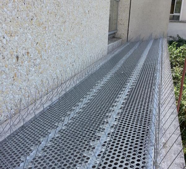 Le service pour lutter contre les pigeons - Pest Control