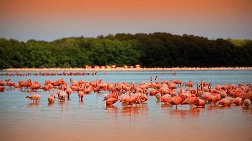 Celestún - Paraíso de aves y flamingos rosados.