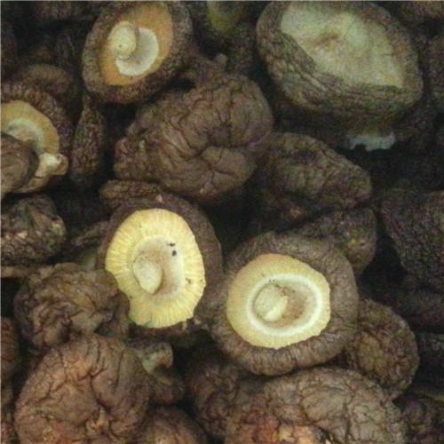 2-3cm light&dark brown shiitake - ST23