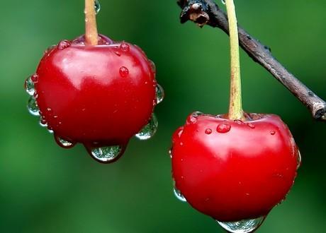 FROZEN FRUITS - FROZEN CHERRY AND SOUR CHERRY
