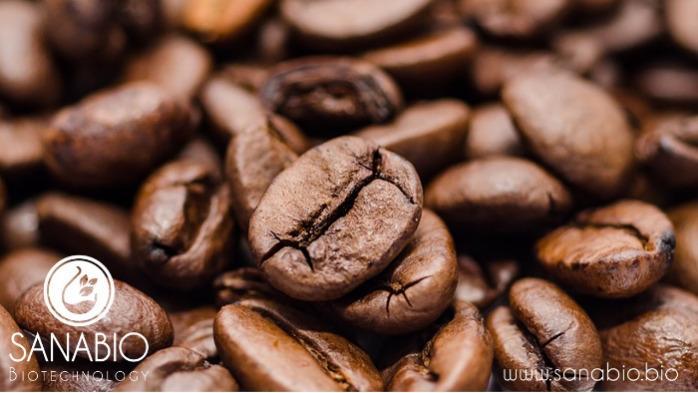 Organic Coffee Bean Oil - For food and cosmetics (COFFEA ARABICA SEED OIL)