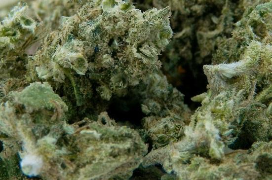 Skunk #1 marihuana