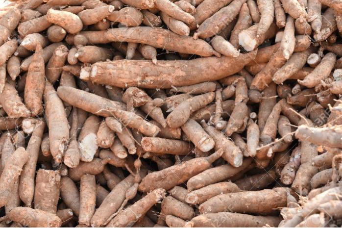 CASSAVA - WHOLESALE cassava