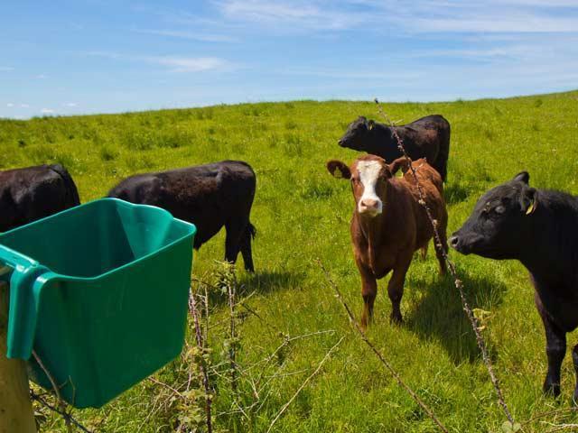 6.5 liters Moveable Hang On Plastic Animal Feed Trough - animal hanging feeder, hanging trough for pig/ sheep/ goat/Alpacas/ horse/llamas