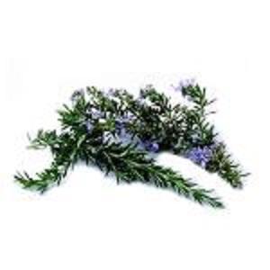 Экстракт розмарина - Экстракты растений