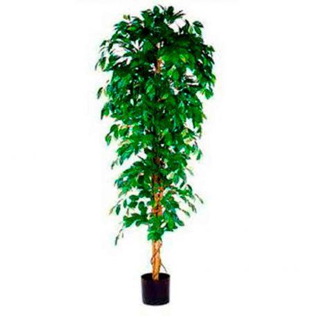Plante Artificielle Ficus Benjamina 210 Cm - Plantes Artificielles