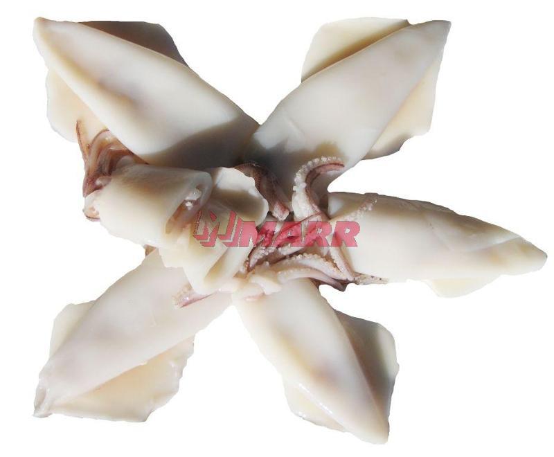 Calamaro del Pacifico Pulito U/5 Cina Congelato OROFISH - Ittico - Molluschi bivalvi e gasteropodi
