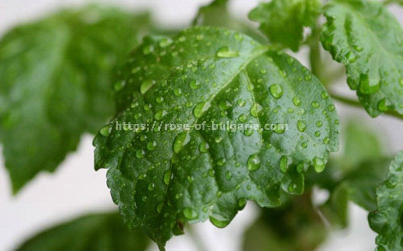 perfume oils - Perfume oil manufacturer in France