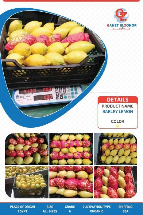 Agrumi egiziani - (Arancia, limone, mandarino)