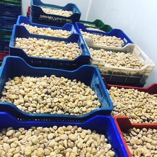 Frozen Chestnuts - Frozen Chestnuts
