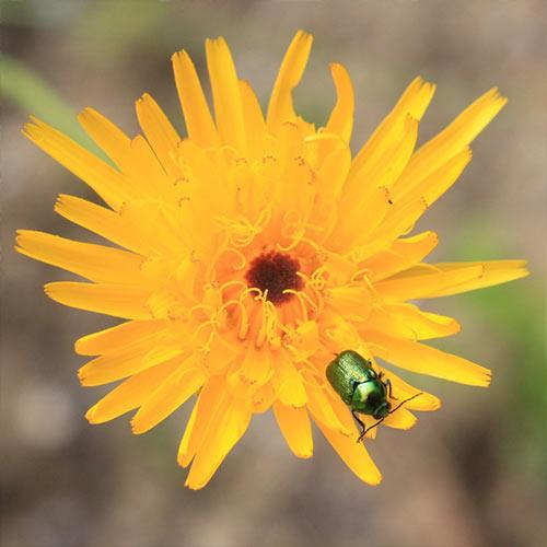 Fertiliser and pesticide sachets -