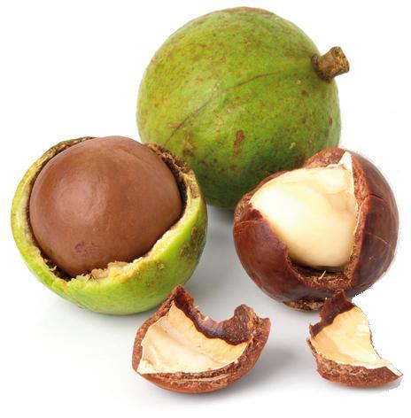 Macadamia - null