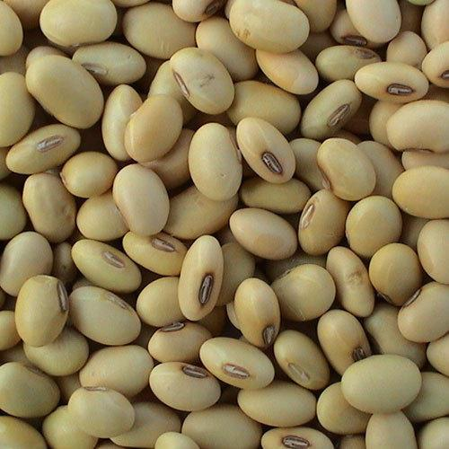 SOYBEANS NOGMO - BRAZILIAN SOYBEANS
