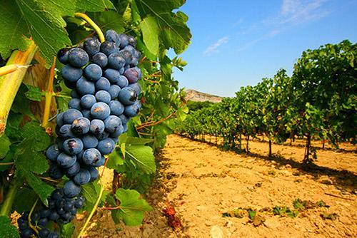 Vino a Granel, Wine Bulk - White, Red, Rose, Sparkling Wine