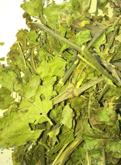 belladonna atropa herbs - Atropa belladonna, atropa belladonna-AE, beladona, belladone, belladonnae herbae