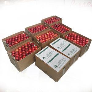 Laminas protectoras, anti-choque para exportación de manzana - PAPELES DE PROTECCIÓN