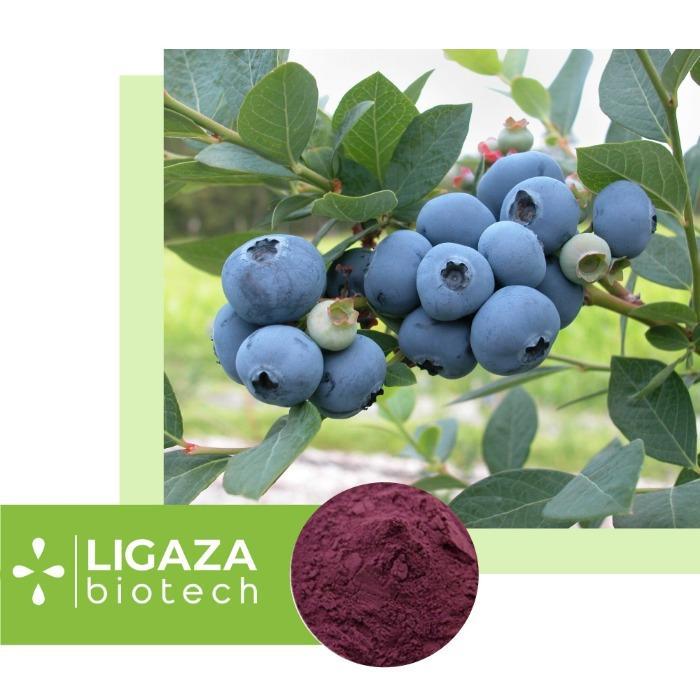 blueberries (Vaccínium myrtíllus) -