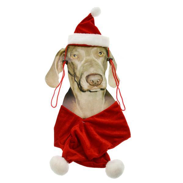 Set pour chien (bonnet + écharpe)