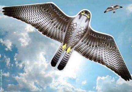 Cerf-volant effaroucheur anti-oiseaux