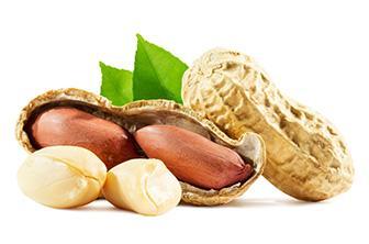 Erdnussprotein