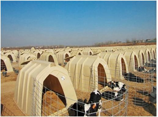 Cow Houses,calf Calves shelter - calf pen,calf hut