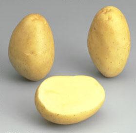 Potatoes - Yellow skin - MONALISA