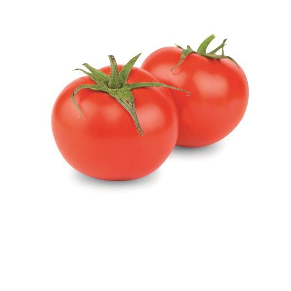 Maccheroncini Tomato And Mozzarella - null