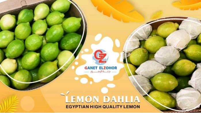 Limone egiziano - Lemon Dahlia