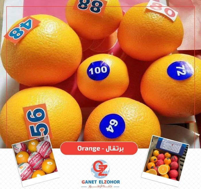 Egyptian citrus  -  ( Orange , Lemon , Tangerine )
