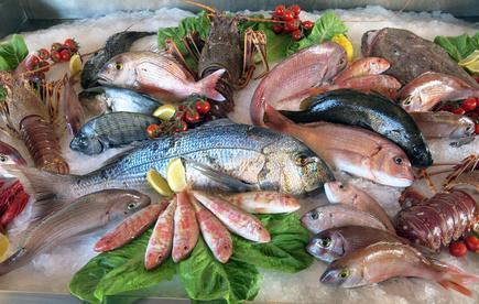 Pesce Fresco e Congelato