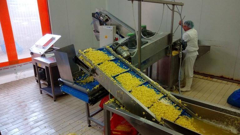 Usine de traitement de pommes de terre fraîches -