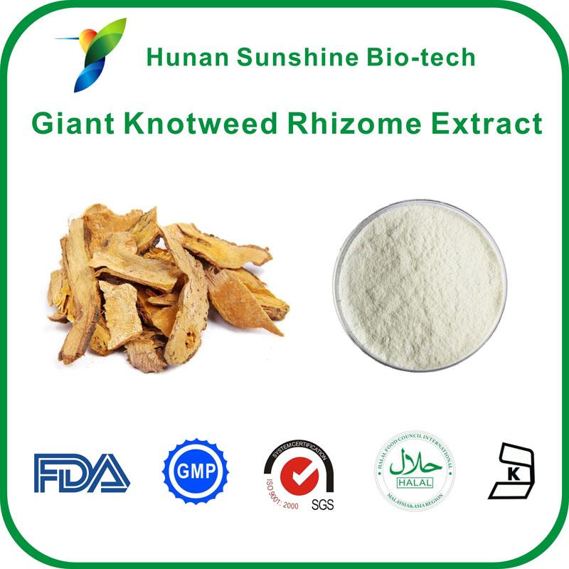 Giant Knotweed Rhizome Extract