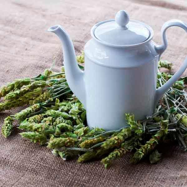 Organic Greek Mountain Tea - Sideritis Scardica