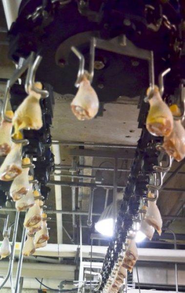 Chicken Meat & Cuts - Halal Brazilian Frozen Chicken Meat