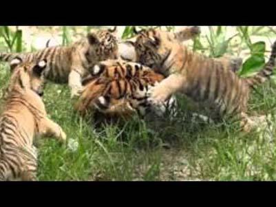 2N 3D Visit The Corbett National Park - Wildlife tour India - 2N Corbett Park (By Car)